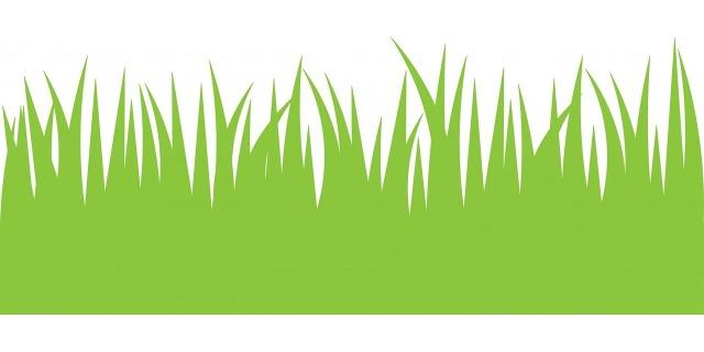 green-grass-163578_1280